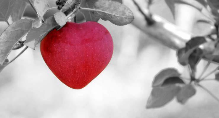 אהבה ללא גבולות