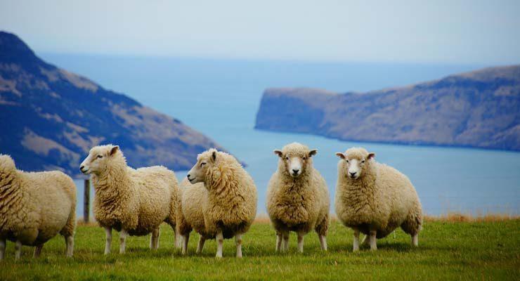 הגירה לניו זילנד