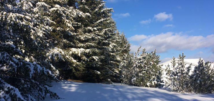 שלג – בנקודות